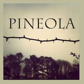 Pineola Cover